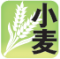 【2月の営農情報】小麦の穂肥の施用について