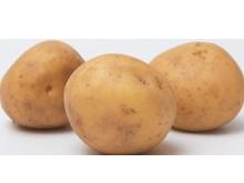 ジャガイモ『忍馬鈴薯(にんじゃがぁ)』