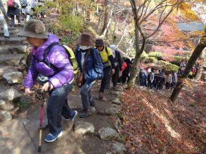 サンシャインウォーキング開催 鶏足寺の紅葉楽しむ