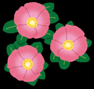 【四季の花づくり】花壇の寒ざらしを行いましょう