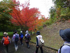 サンシャイン倶楽部 紅葉の下で健康ウォーキング